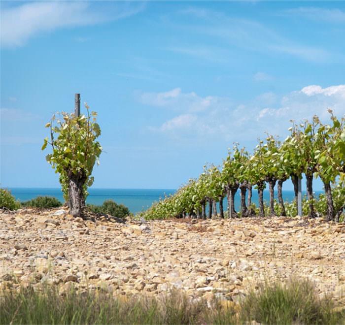 Les vignes de la Clape