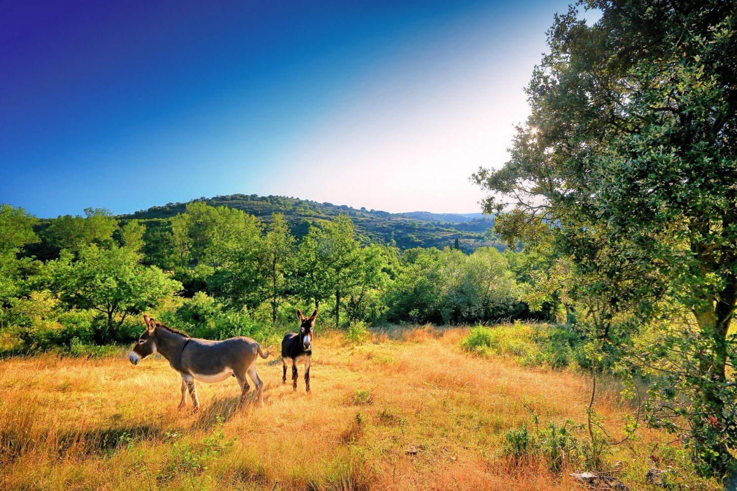 Rando à vélo à travers les paysages de Hautes Corbières ©Gilles Deschamps