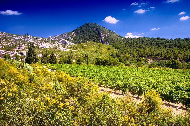 Les vignes dans l'Alaric ©Gilles Deschamps