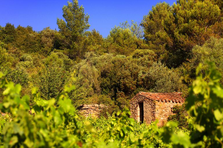 Conilhac corbieres, vigne, pins et cabane