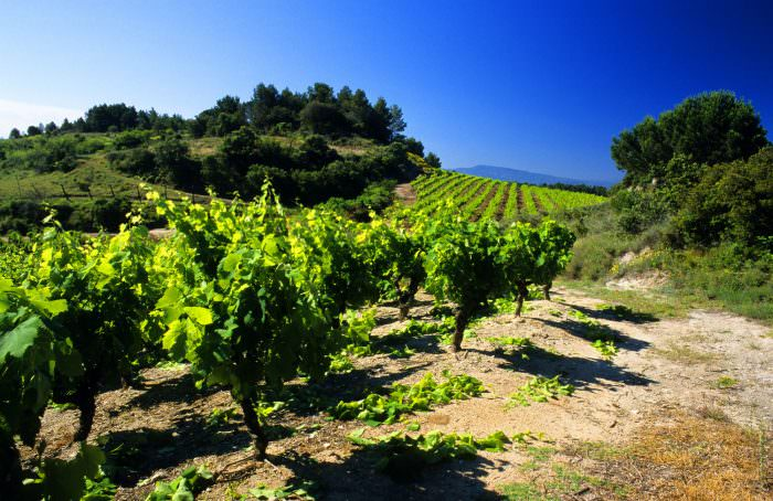 Balade dans les vignes à Félines-Minervois ©Céline Deschamps-ADT de l'Aude