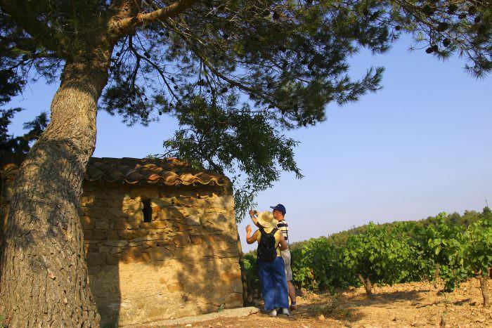 Lézignan-Corbières, randonnée dans les vignes. Crédit : C. Deschamps
