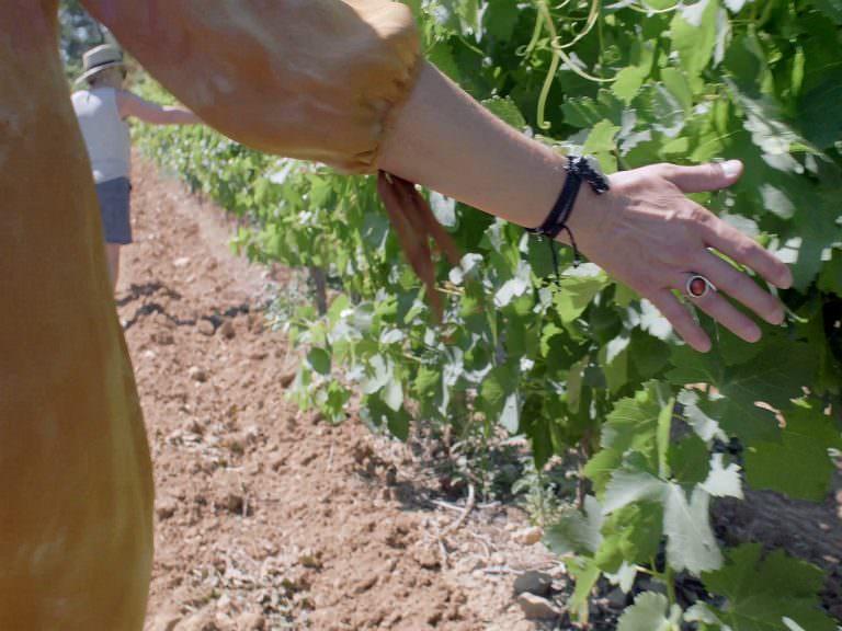 La narbonnaise, vigne