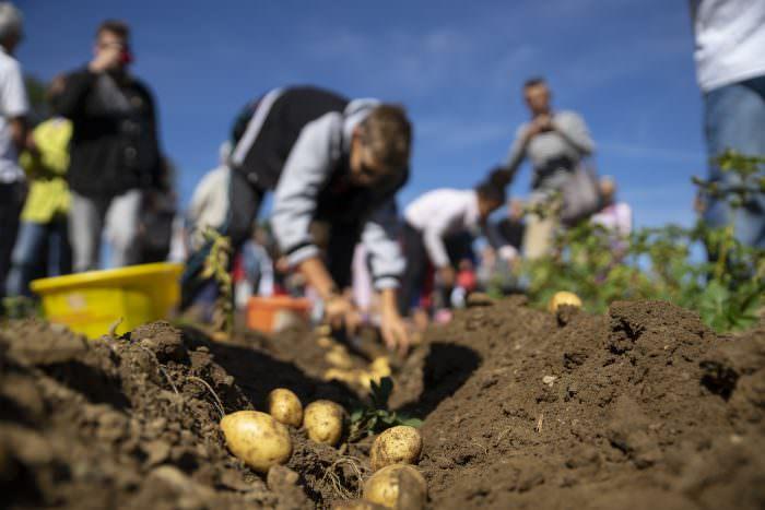 Foire de la pomme de terre du Pays de Sault