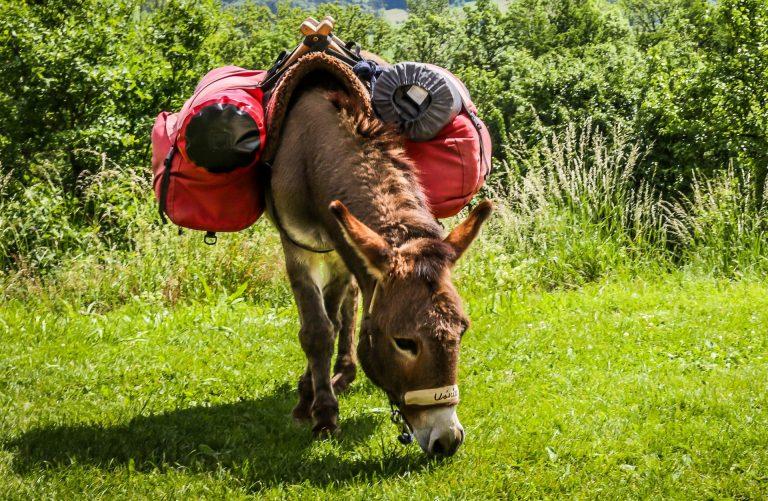 Randonnées avec des animaux de bât © B. Yates - OT Castelnaudary