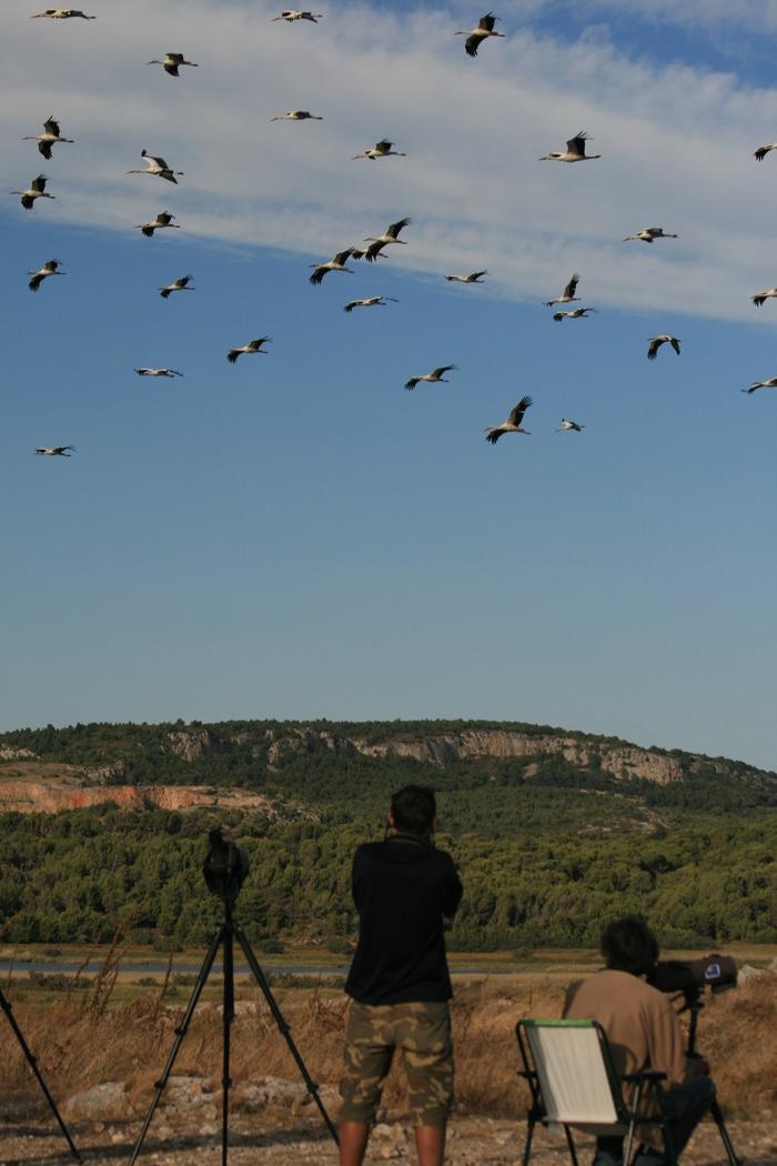 Observation des oiseaux au Roc de Conhiac à Gruissan