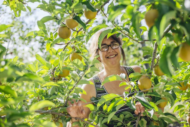 Producteur de pommes Pays Cathare dans l'Aude ©L. Charles -ADT Aude