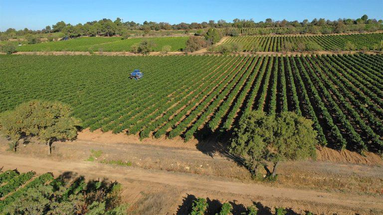 A la découverte des domaines viticoles de l'Aude ©Raphaël Kann-ADT de l'Aude