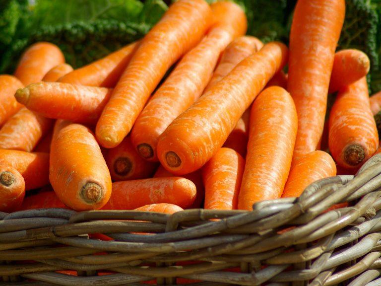 Panier de carottes©pixabay, ADT de l'AUDE
