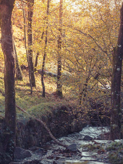 Rivière en Montagne Noire au coeur de l'automne ©Vincent Photographie, ADT de l'Aude