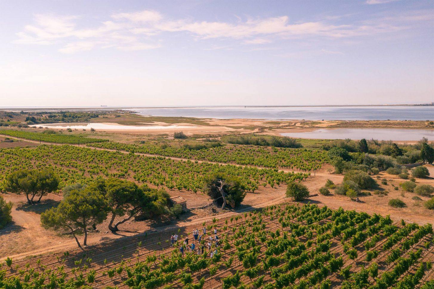 Balade et dégustations de vins dans les vignes à Gruissan ©Vincent Photographie - ADT de l'Aude