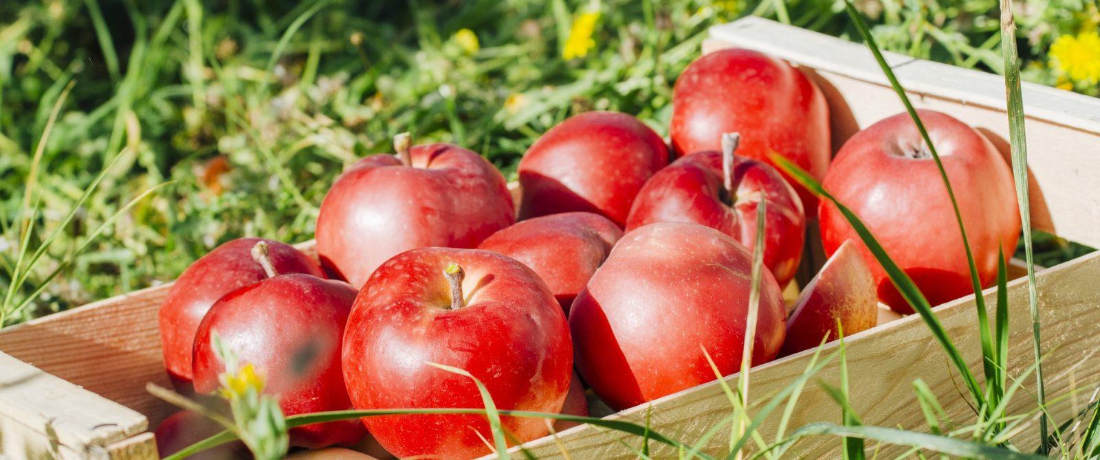 Cagette de pommes ©l-charles-ADT-Aude