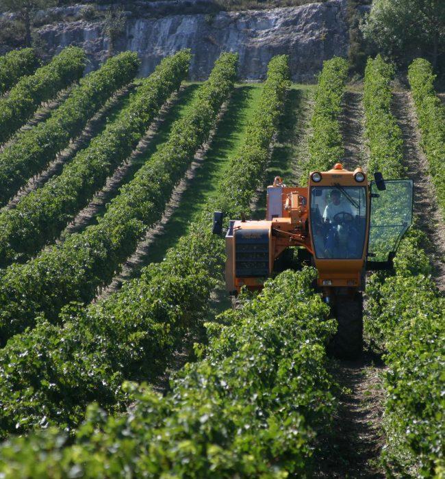 Aragon, vigne et machine