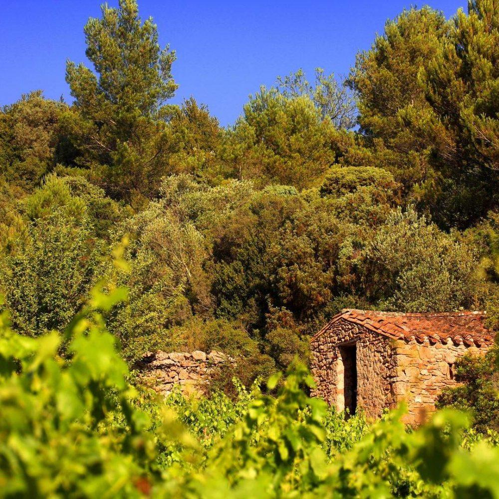 Balade dans les vignobles du Minervois ©Céline Deschamps-Conseil Départemental de l'Aude