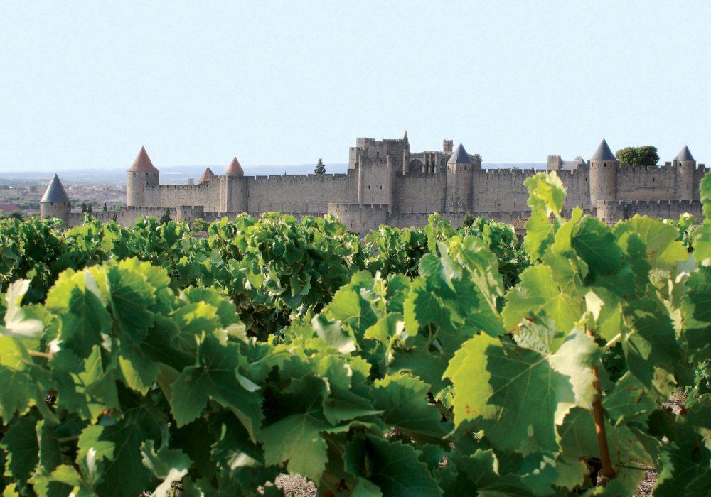 Carcassonne, Cité et vignes