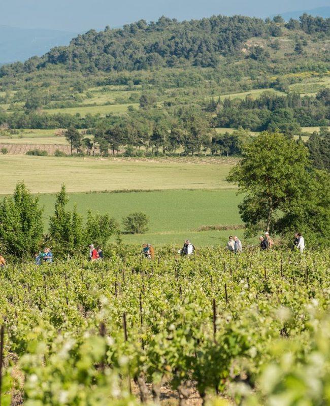Balade à travers les vignes au château de Pennautier ©Lorgeril