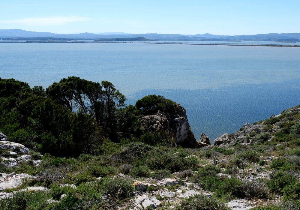 La garrigue et la mer à Gruissan
