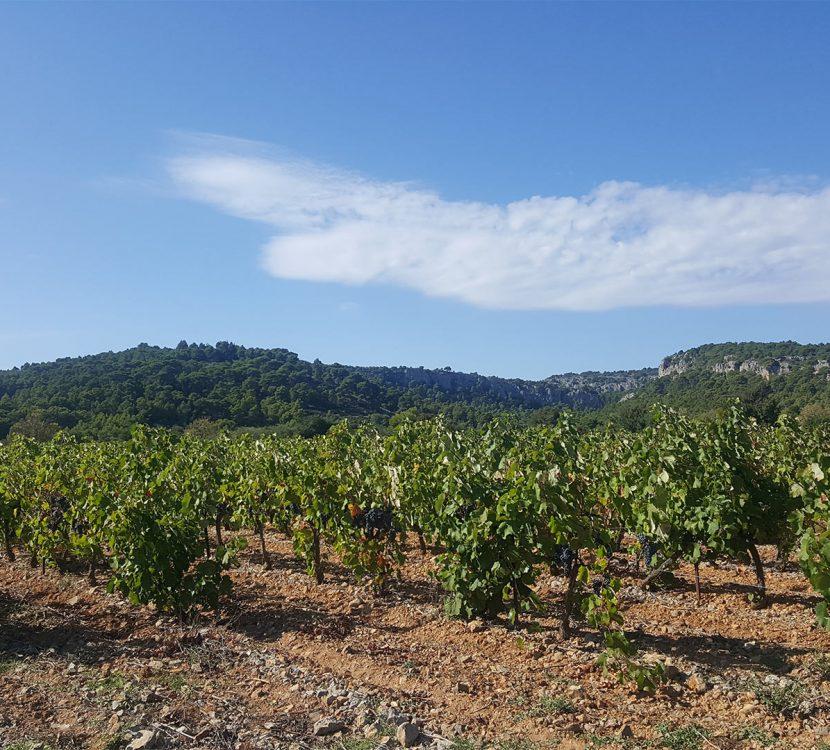 Visite d'un vignoble à Gruissan ©Sylvie Alibeu - ADT de l'Aude
