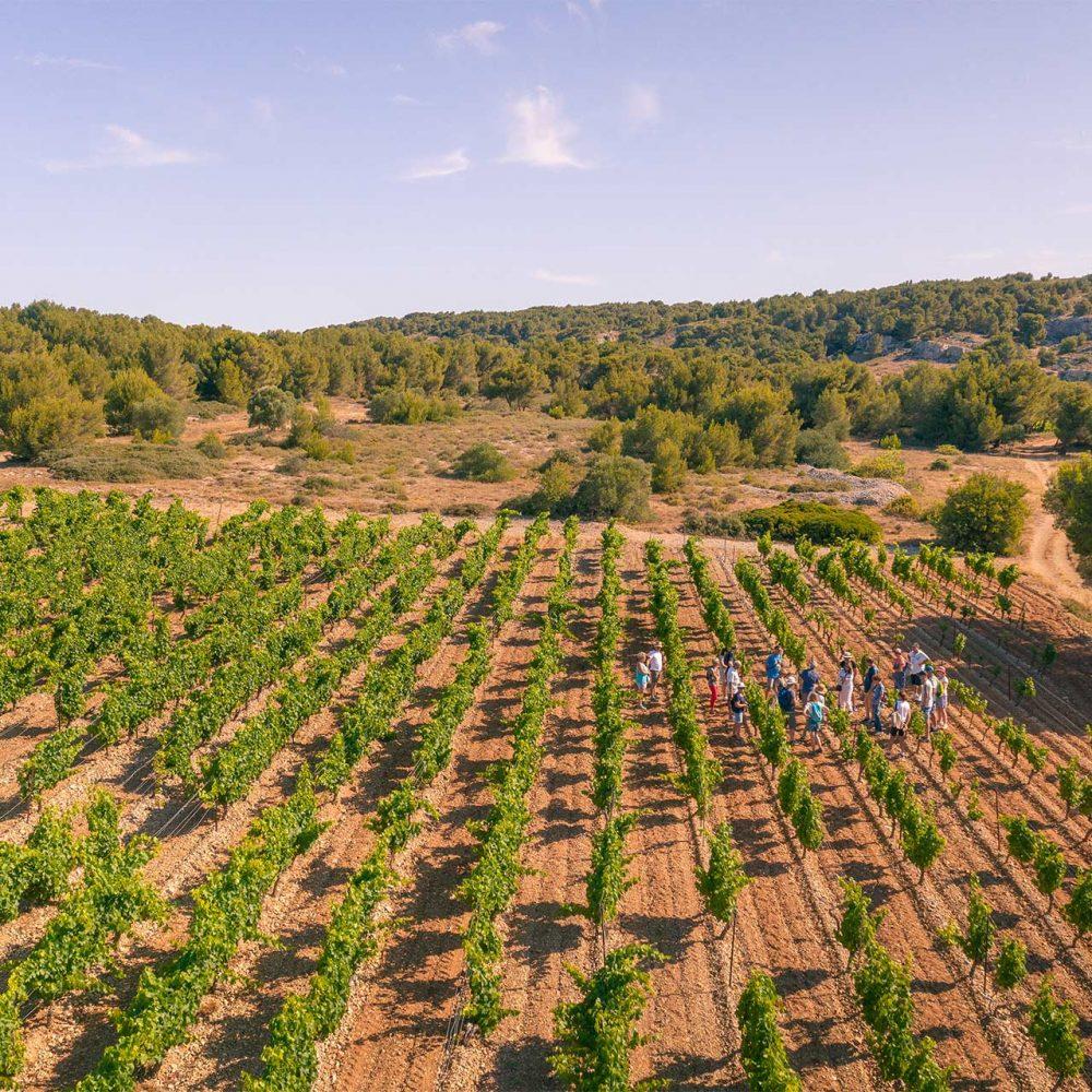 Balade découverte dans un vignoble de l'Aude ©Vincent Photographie - ADT de l'Aude
