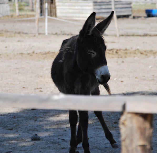 Visite de la ferme la matarelle à Laurabuc ©Office de Tourisme de Castelnaudary