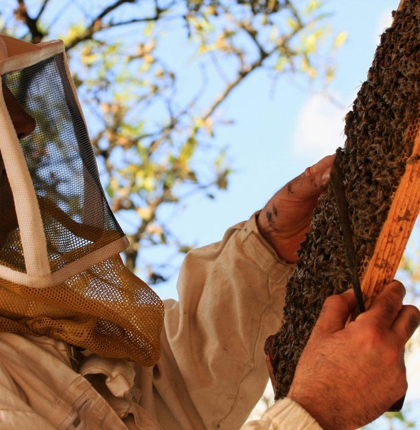montserret-2012-08-mpc-abeille-cr-miellerie-clauses.jpg