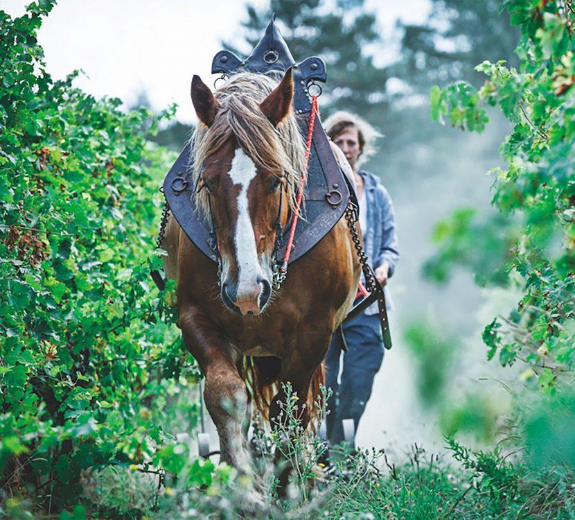 Le Domaine du Grès Vaillant et son vin bio à cheval ©Domaine du Grès Vaillant