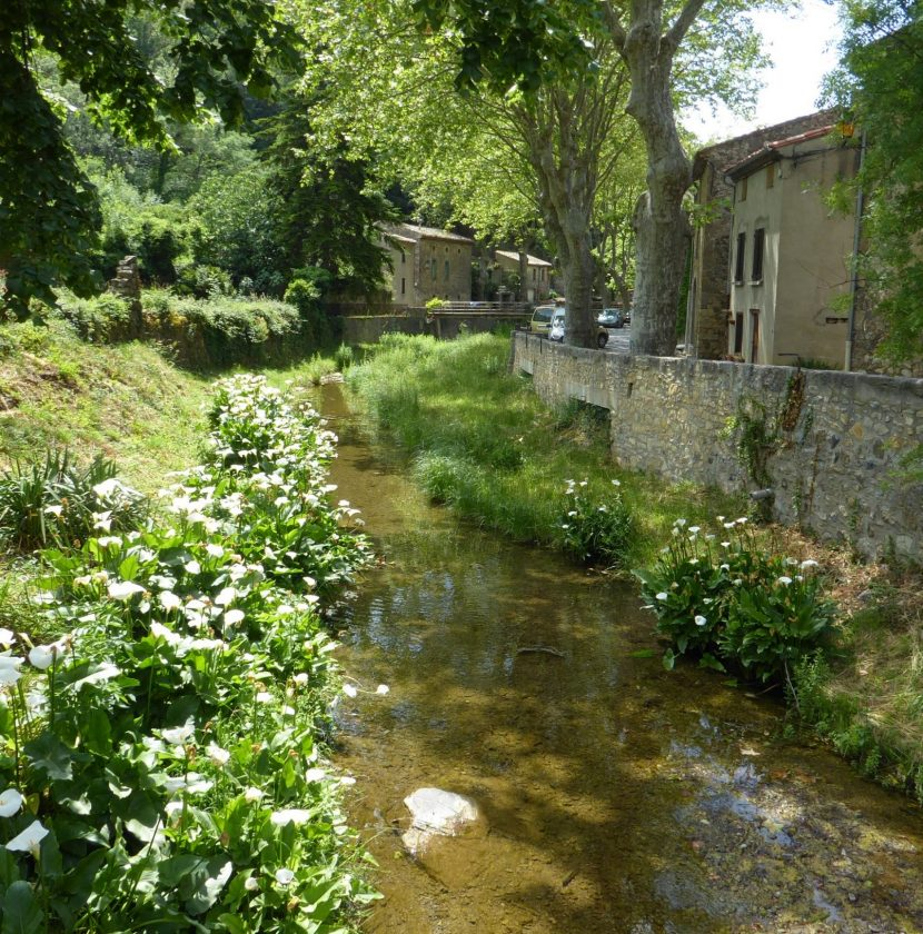 termes-2019-07-riviere-village-cr-caue11