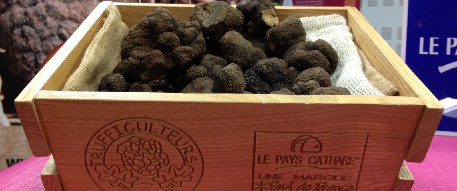 terroir truffe cr yann galy