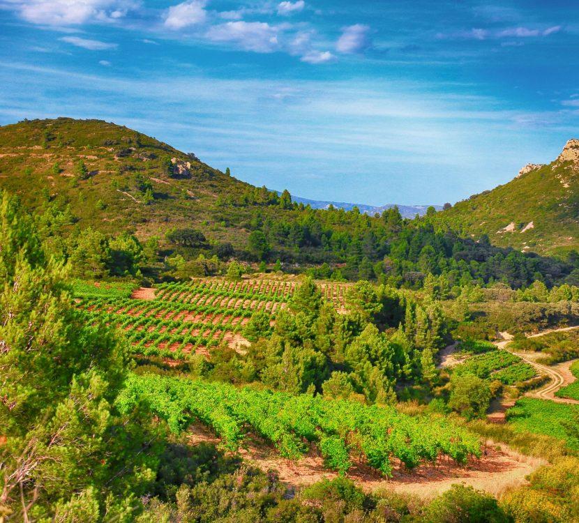 Les vignoble dans le Fitou ©Gilles Deschamps