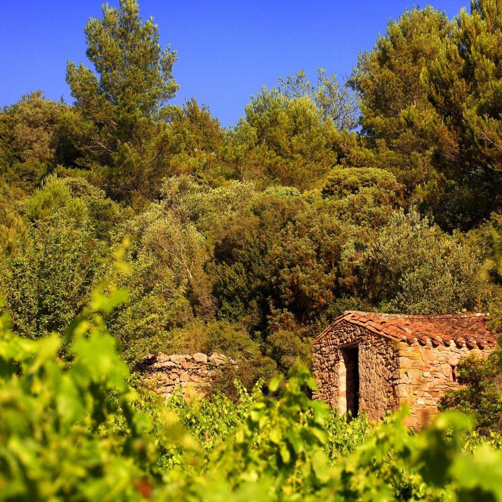 Vignobles Minervois ©CDT Aude C&G Deschamps (Copier)