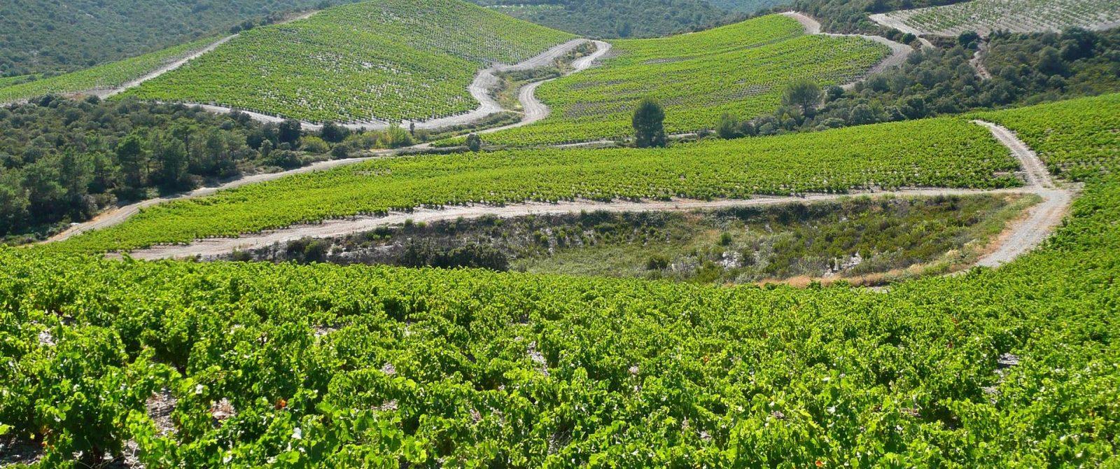 Villeneuve les corbières, vignes, aoc corbières